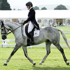 Tinker Dressage at Blair horse trials