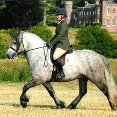 Ted ridden at the Breed Show