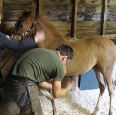 Mia with the farrier