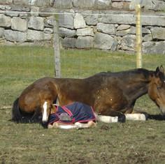 Mia and Shea Sleeping