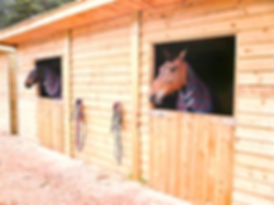 Two horses looking out of their wooden stables