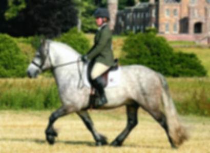 Photgraphy Highland Pony Ridden