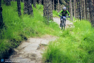 Image of a mountain biking cyclist coming down a forest track