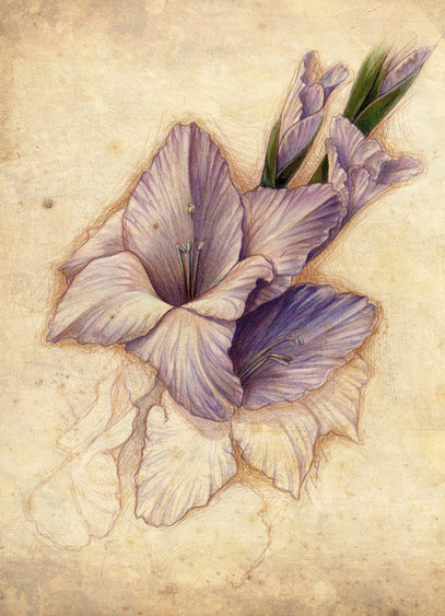 Gladiolus for Mom