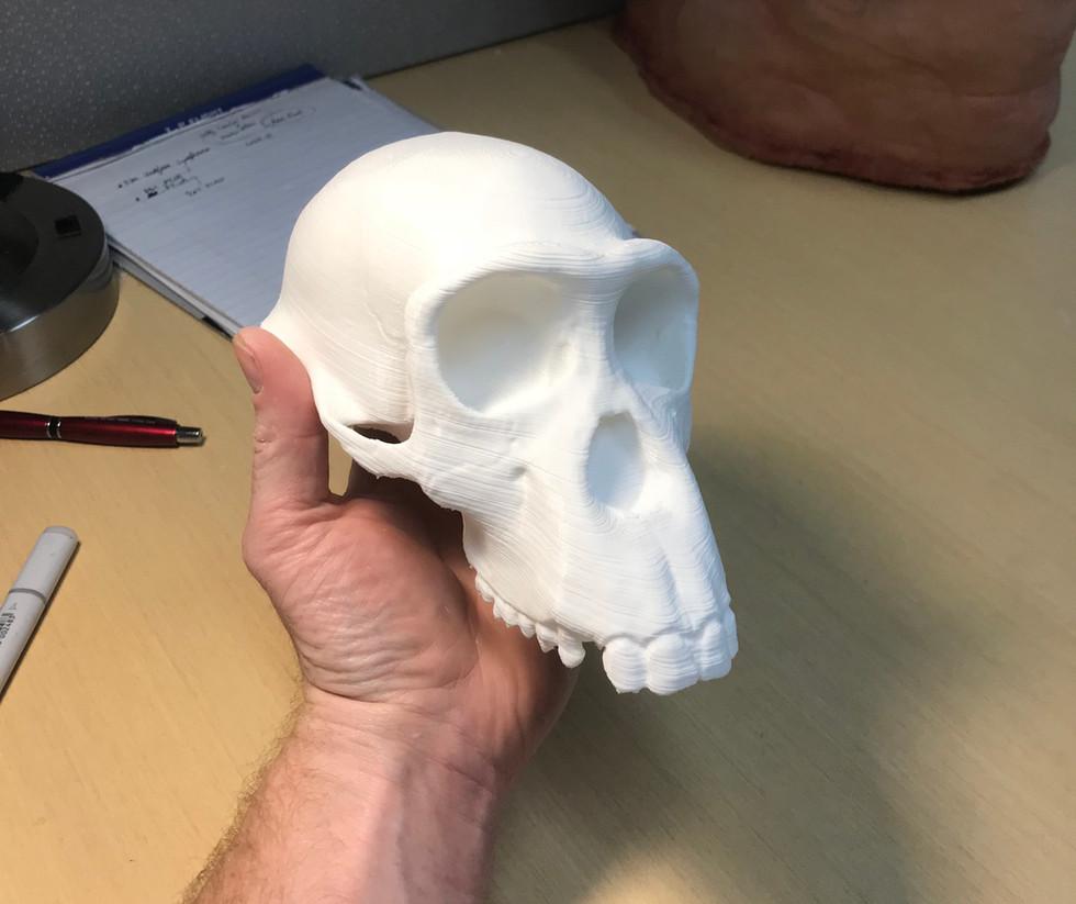 3D-printed Skull