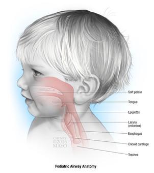 Pediatric Airway Anatomy
