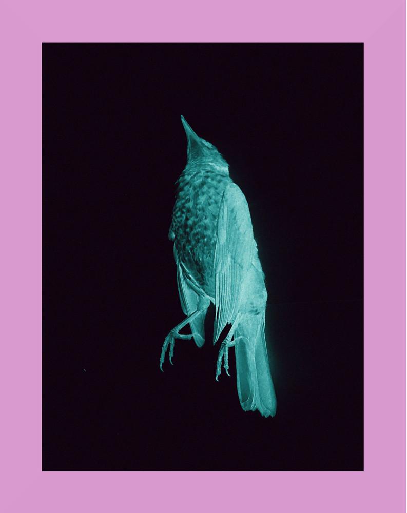 Not Vain, Not Perverse, Not Artifical by Oscar Vinter