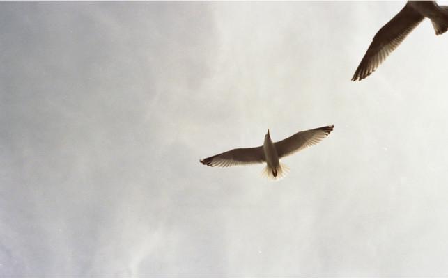 Gulls by Emma Rose
