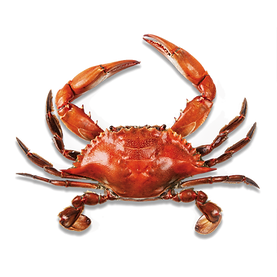 crab_PNG27.png