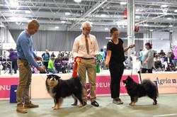 Best bitch at European Dog Show 2015