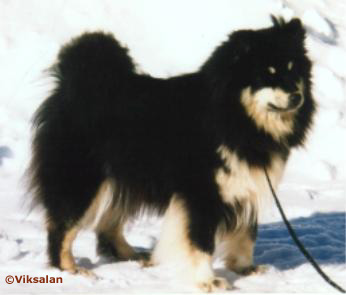 Turnukan Bassan (half sister)