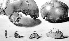 ossos.jpg