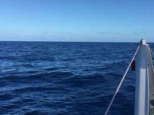 Sailing Blue Ocean on a catamaran