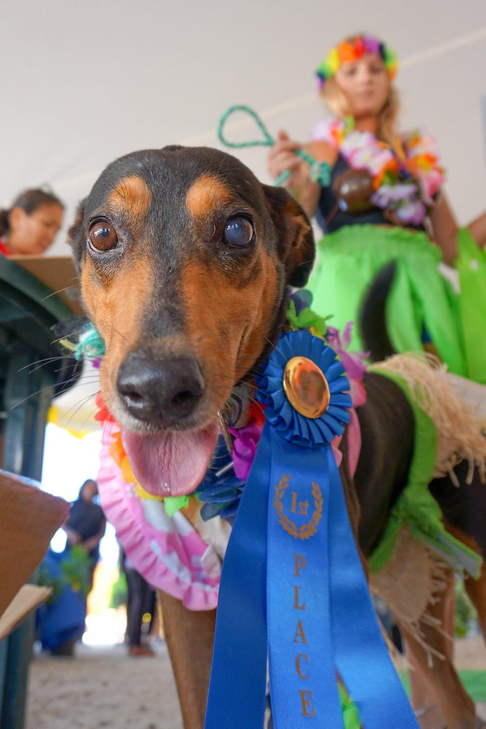 TCSPCA Dog Show