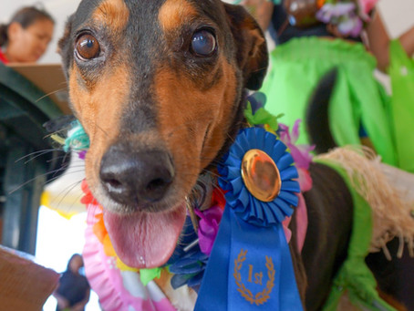 "TCSPCA 12th Annual ""Just For Fun"" Dog Show"