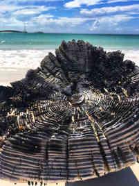 Drift-wood-beach-Atwood-Harbour-Atwood-Harbour-Beach-Bahamas-Sailing-Catamaran-Charters