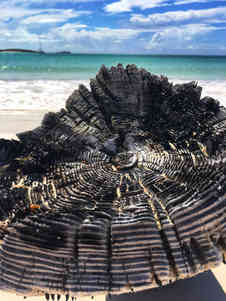 Drift-wood-beach-Atwood-Harbour-Atwood-Harbour-Beach-Bahamas-Sailing-Catamaran-Charters