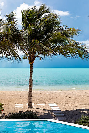Palm Tree Beach Turqioise Ocean Turks Caicos