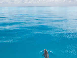 Photo by Stephen Frink Lone Dolphin.jpg