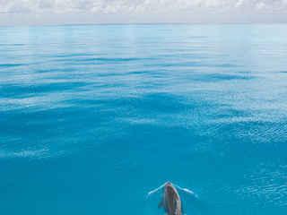 Photo by Stephen Frink Lone Dolphin.jpg