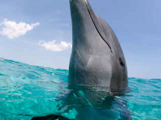 Photo by Stephen Frink Dolphin with Head