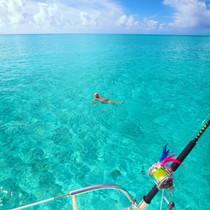 swimming bahamas charters dave calvert