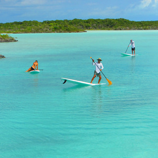 SUP in the Mangroves