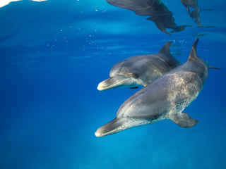 Photo by Stephen Frink 2 Dolphins - Ocea
