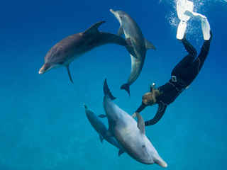 Photo by Stephen Frink 4 Dolphins - Free