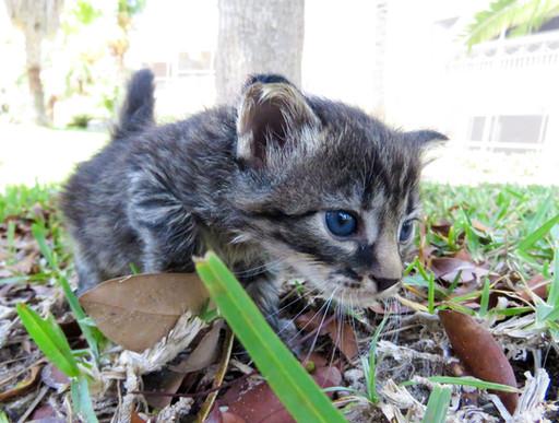 Foster Kitties_022.JPG