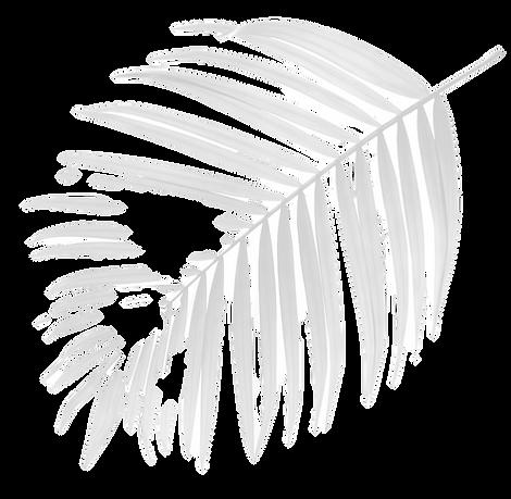 Palm%20Tree%20Leaf_edited.png
