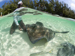Photo by Stephen Frink Man with Stingray
