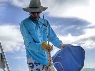 Lobster Captain Dave Calvert Bahamas Sailing Catamaran Charters