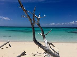 Drift wood, white sand Beach and Turqoise ocean