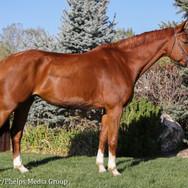 pony lane farm photoshoot, ruby-2.jpg