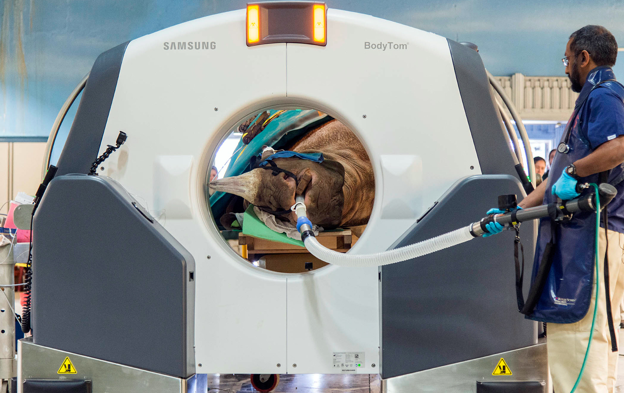 Padding2LaylaRhino-CT-Scan