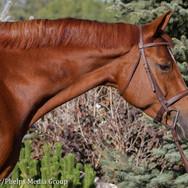 pony lane farm photoshoot, ruby-3.jpg