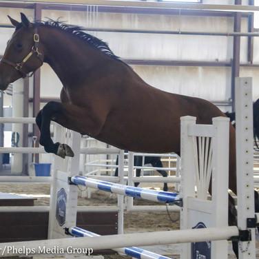 pony lane farm photoshoot, quaint-12.jpg