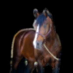 dulf van den bisschop pony lane farm-28_
