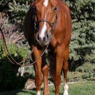pony lane farm photoshoot, ruby-11.jpg