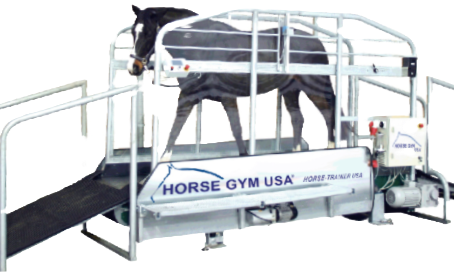 The Walk to the Winners' Circle Starts with HORSE GYM USA®