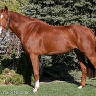 pony lane farm photoshoot, ruby-7.jpg