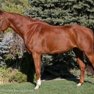 pony lane farm photoshoot, ruby-5.jpg