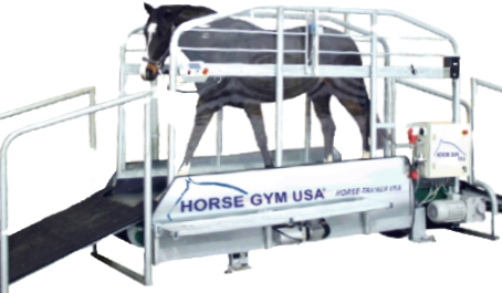 Celebrate a Decade of Winning Form in Sport Horses Horse Gym USA Sponsors Top Equine Athlete Awards