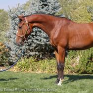pony lane farm photoshoot, quest-4.jpg