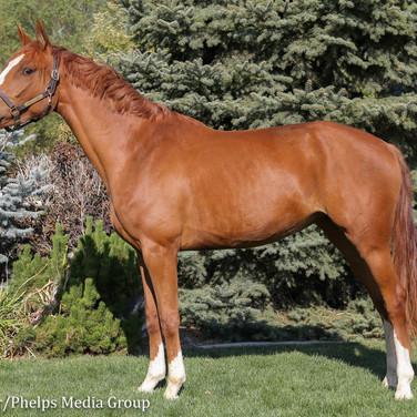 kortana, pony lane farm photoshoot-4.jpg