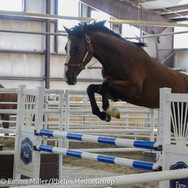 pony lane farm photoshoot, quest-8.jpg