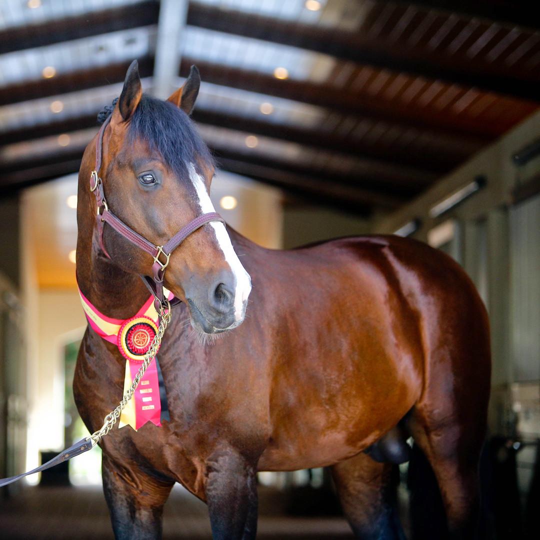 dulf van den bisschop, pony lane farm-19