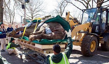 PaddingLayla-Rhino-Front-lo1250.jpg