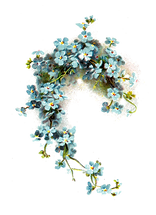 Forget-Me-Not-PNG-Image.png